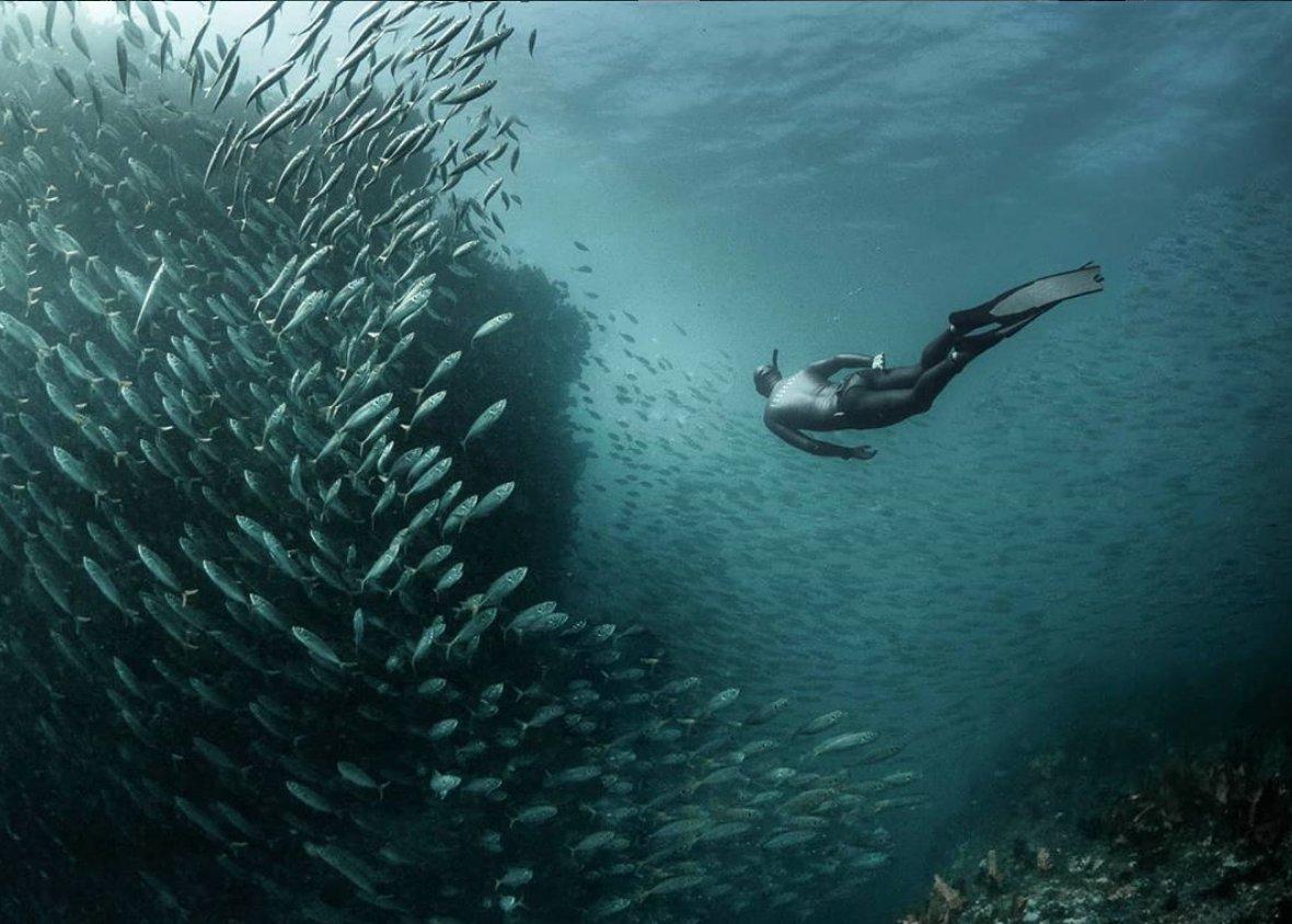 Fish Friends   Freediver @danparsons.freediver  @girlthatfreedives  #marinelife #explore #fish #oceans #freediver #freediving #onebreath #apnea #underwaterphotography #freedivingphotography #underwater #underthesea  .pic.twitter.com/TXLzYaFAFl