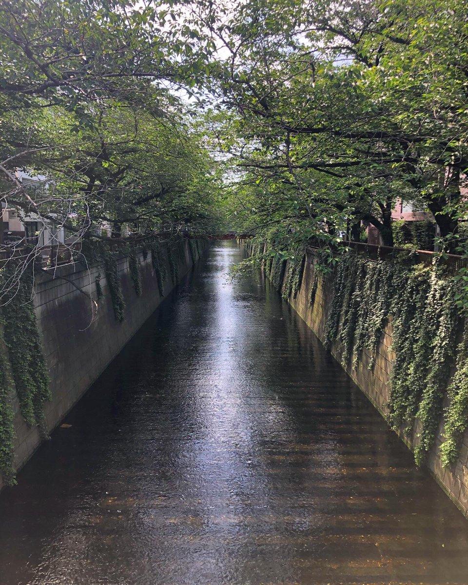 朝のウォーキング途中に通った橋 #目黒区 #目黒川 #緑橋 #tokyo  #meguroriverpic.twitter.com/FIrS8DNDM1