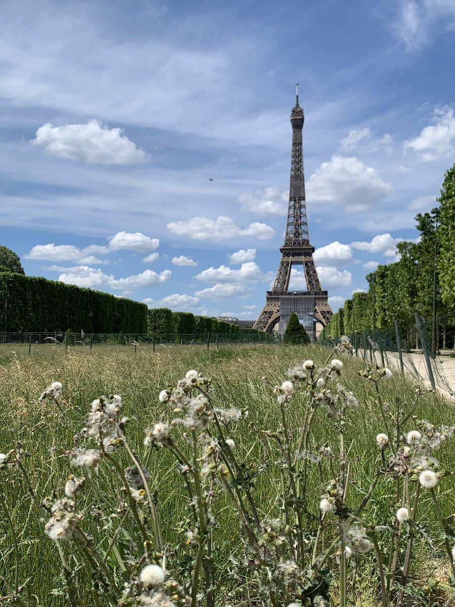 Countryside in Paris. #Paris #coronavirus #COVID19 #Deconfinement #TourEiffel pic.twitter.com/sXHZT7a54n