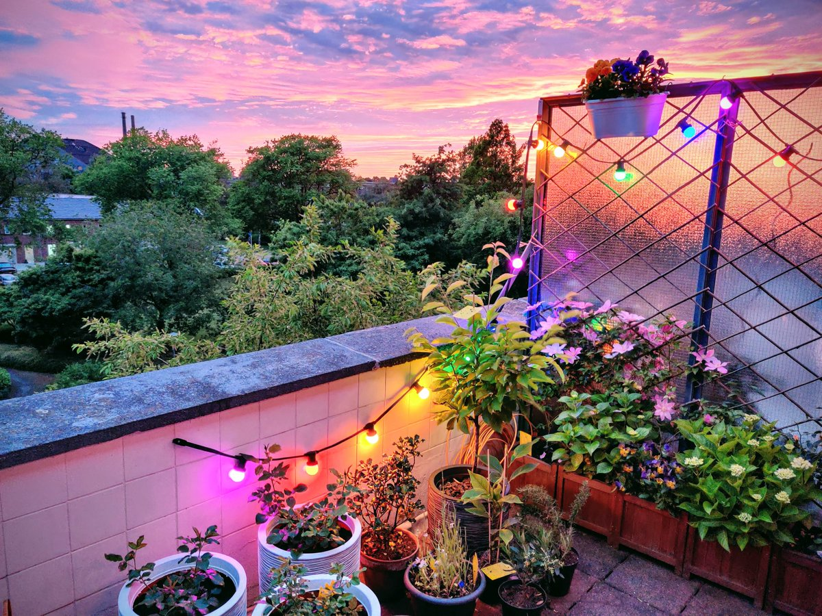 I've been working pretty hard over the past few months to make our balcony a beautiful and peaceful space to unwind during these crazy times  Breathtaking sunsets certainly kick it up a notch though  #balconygarden #sunsetlover pic.twitter.com/1X4eyKo6xi