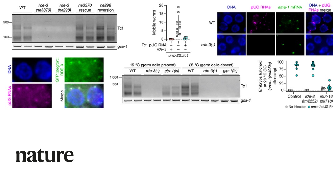 A Nature paper describes an enzyme that converts mRNAs into templates for the formation of small RNAs and mediators of transgenerational gene silencing. go.nature.com/2THpuVN
