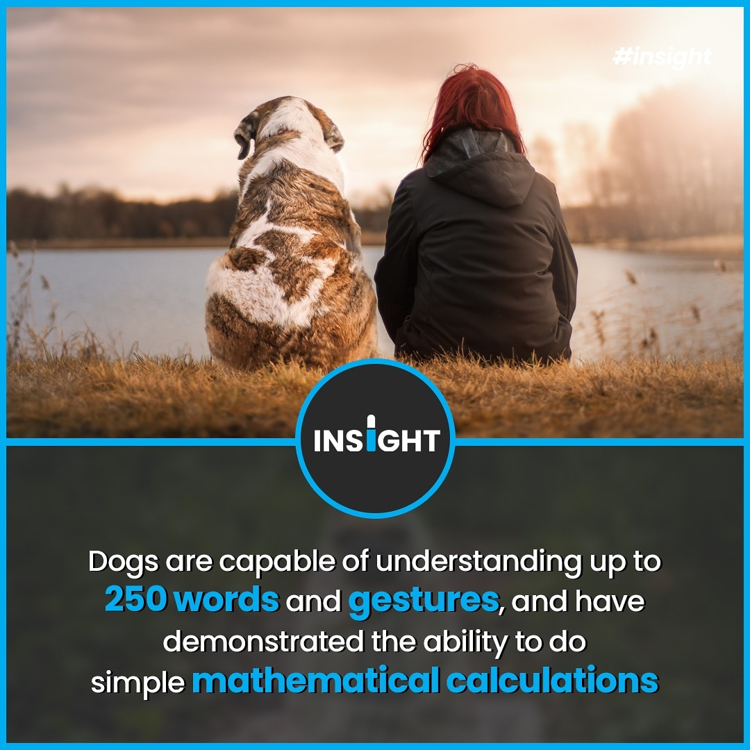 Dogs are as intelligent as the average two-year-old child, according to research by animal psychologists.  #Insight #factoftheday  #didyouknowfacts #factsonly   #factss  #allfacts #coolfacts #sciencefacts  #factsonfacts #worldfacts #explorepage #explore  #realfacts #doyouknowpic.twitter.com/NHFdJxMVox