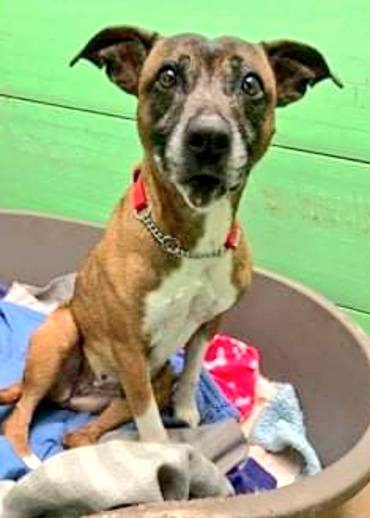 Afternoons pals, can I introduce yoos to da luffly laydee who goes by da name of Jessie 💙 she was a stray and no ones comes for her so now she needs a luffly new home. Yoos can call da kennel nannies on 01952 541254 for more infos 💙 shes about 10 years old so needs comfy bed!