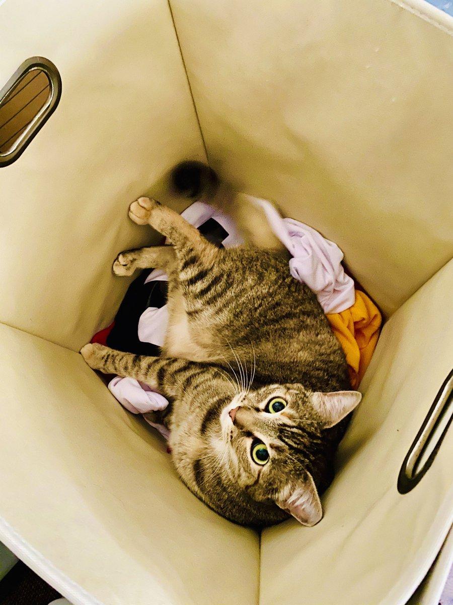 #SundayFunday calls for the Hamper Game!  - Hazel   #SundayMorning #sundayvibes #Sunday #SundayFeels #cats #CatsOfTwitter #CatsOfTheQuarantinepic.twitter.com/4QtXa1p0q8
