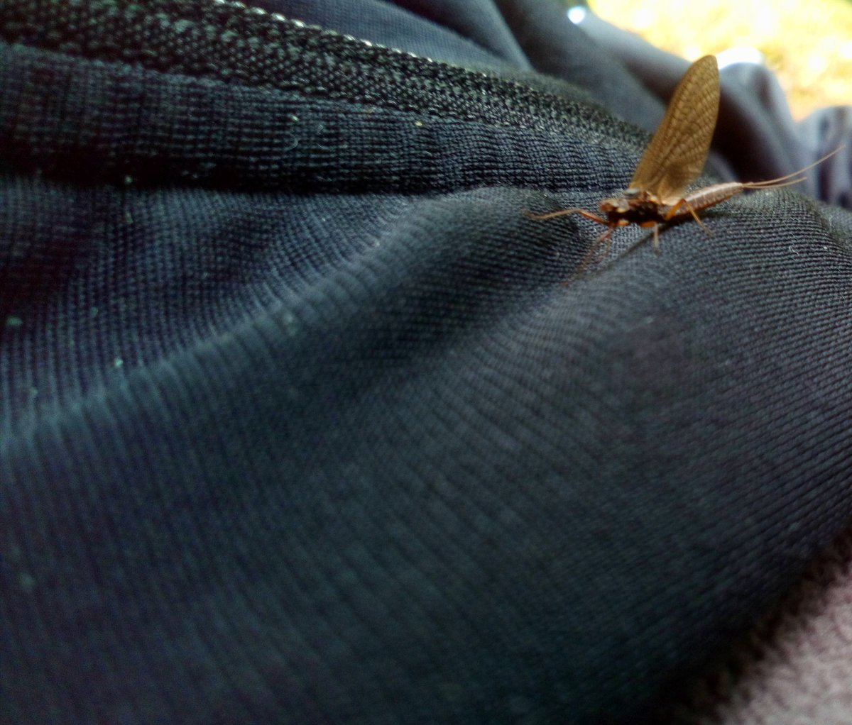The insect was trying to climb on the jacket Good climber we can say  #photography #outdoors #nature #insects #wildlifepic.twitter.com/851to0XVQm