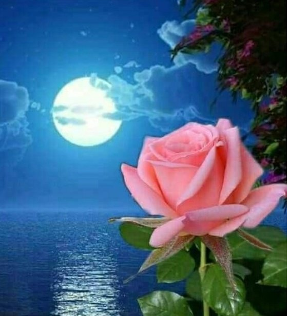 June's full Moon, known as theRose Moon, will reachpeak illumination at 3:12P.M.Eastern Time on the 5th. #fullmoon  <br>http://pic.twitter.com/yK09oMIa2a
