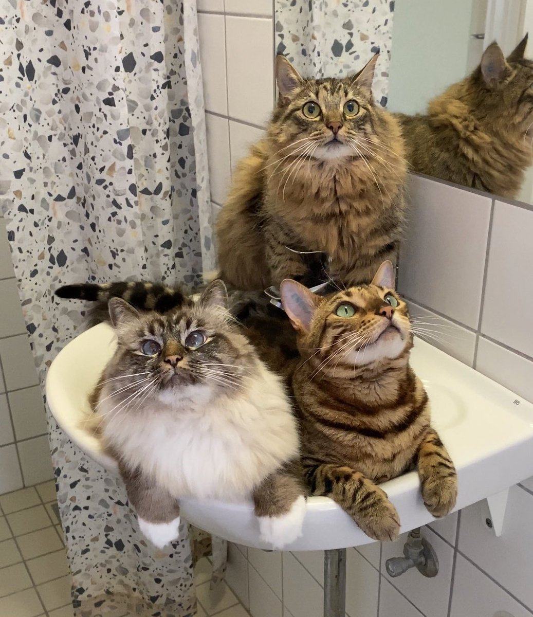 Always watching when you are on WC.  #cats #CatsOfTwitterpic.twitter.com/ydB2H9PHgj