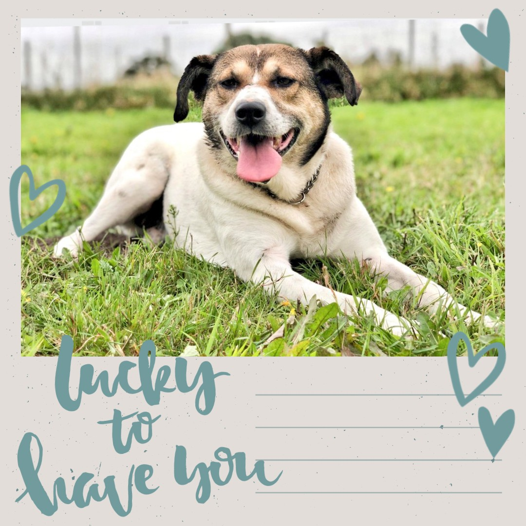 Fank yoos so much to each and effuryone of yoos for sharing my posts and sharing da love to helps me find my special hoomans. I so excited, after more dan 800 days in a kennel I finally haff a sofa and a home to calls my own. From da bottom of my doggy heart, FANK YOOS!!!! 😘💙💙