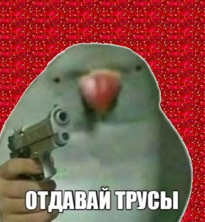 Попугай с пистолетом мем рисунок карандашом
