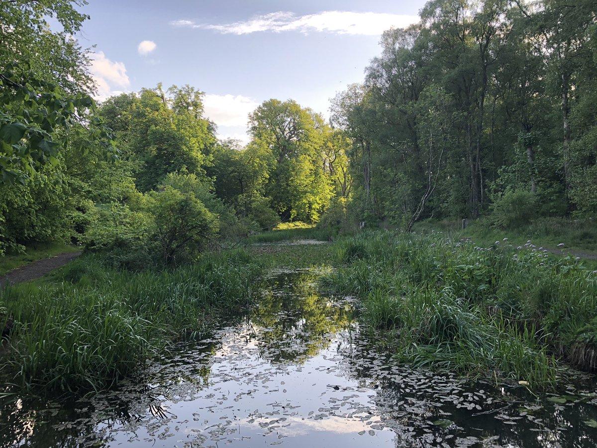 Beautiful evening at the duck pond #Bellsquarry #SundayMotivation @WoodlandTrust<br>http://pic.twitter.com/lvp3Z5L9ZQ