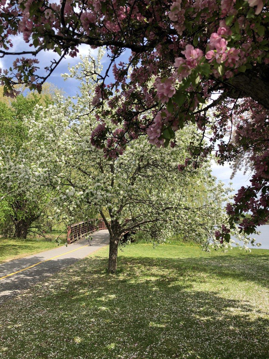 Beautiful Ottawa day - the Arboretum is at its peak!  #ottawa pic.twitter.com/peYFAvONTN