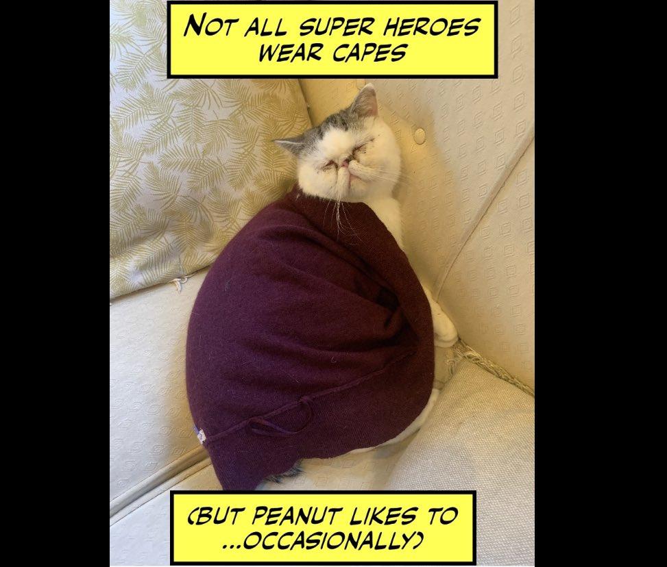 #LeGrandPeanut #covid_19 #covid19 #covid #cat #cats #catsofinstagram #catsoftwitter #cats_of_instagram #catlife #catstagram #catsagram #funnycats #funnycat #paws #pawsome #catlovers #catsrule #catslife #superheroes #supercat #cute #cutecat #Caturday #CaturdayMorningpic.twitter.com/BMjuqktWlV