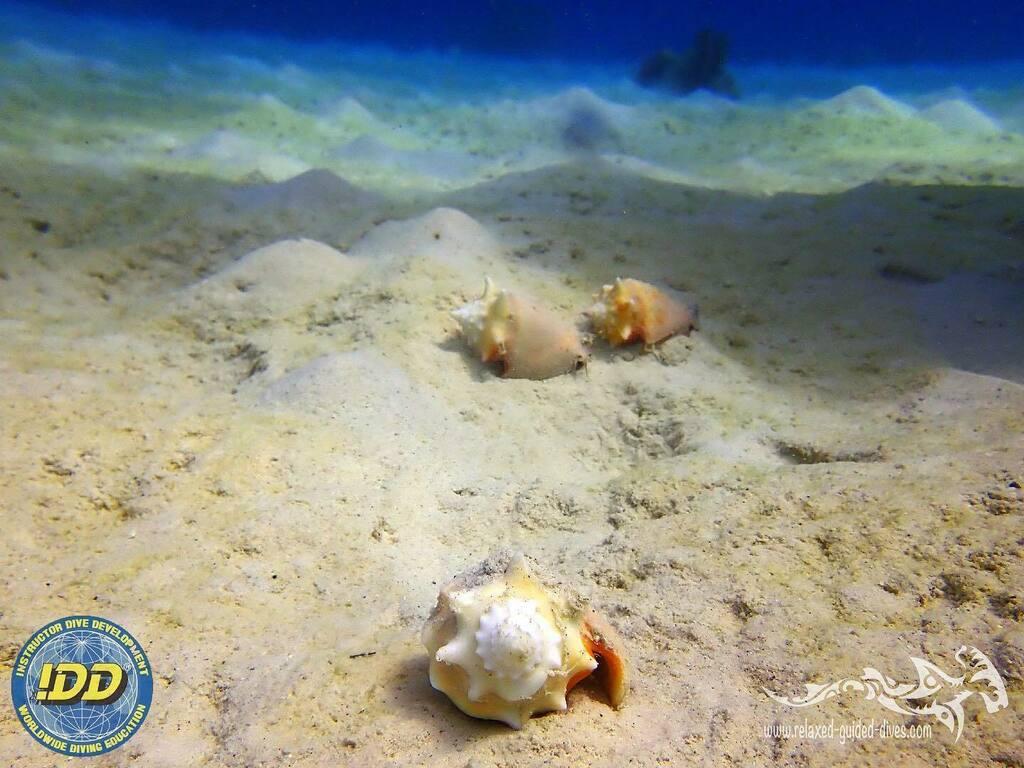 Winning the race at Curaçao ...#tauchen #diving #duiken #fun #curacao #relaxedguideddives #scuba #scubadiving #travel #explore #discover #oceanreef #cressi #adventure #padi #seaturtle #turtle #divecuracao #bestvacations #travel #duikeninbeeld #to… https://instagr.am/p/CBF4sRog9ar/pic.twitter.com/M4aZkEFXAK