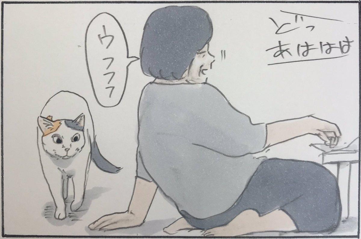 『猫の理不尽まめちしき』