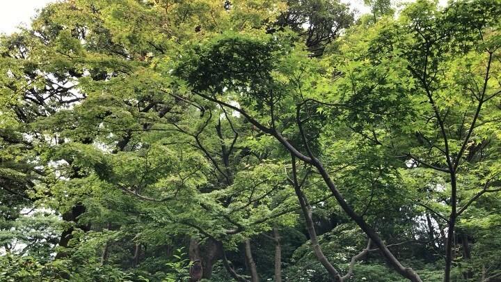 Taking a walk at the park.  公園をお散歩。  #池田山 #ikedayama #tokyo #japan #instagramjapan #instagram Watch #Instavideo:https://instagr.am/p/CBFfGZ5AKAj/pic.twitter.com/MFZBJ08pfb