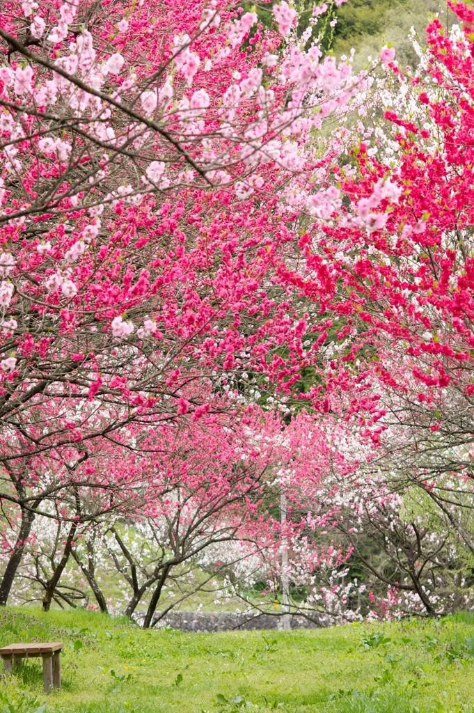Beautiful Japan. #Flowers #Japan #japanese #NaturePhotography #nature #flower #TwitterNatureCommunity #StayAlert #StayHomepic.twitter.com/PmWNS687il
