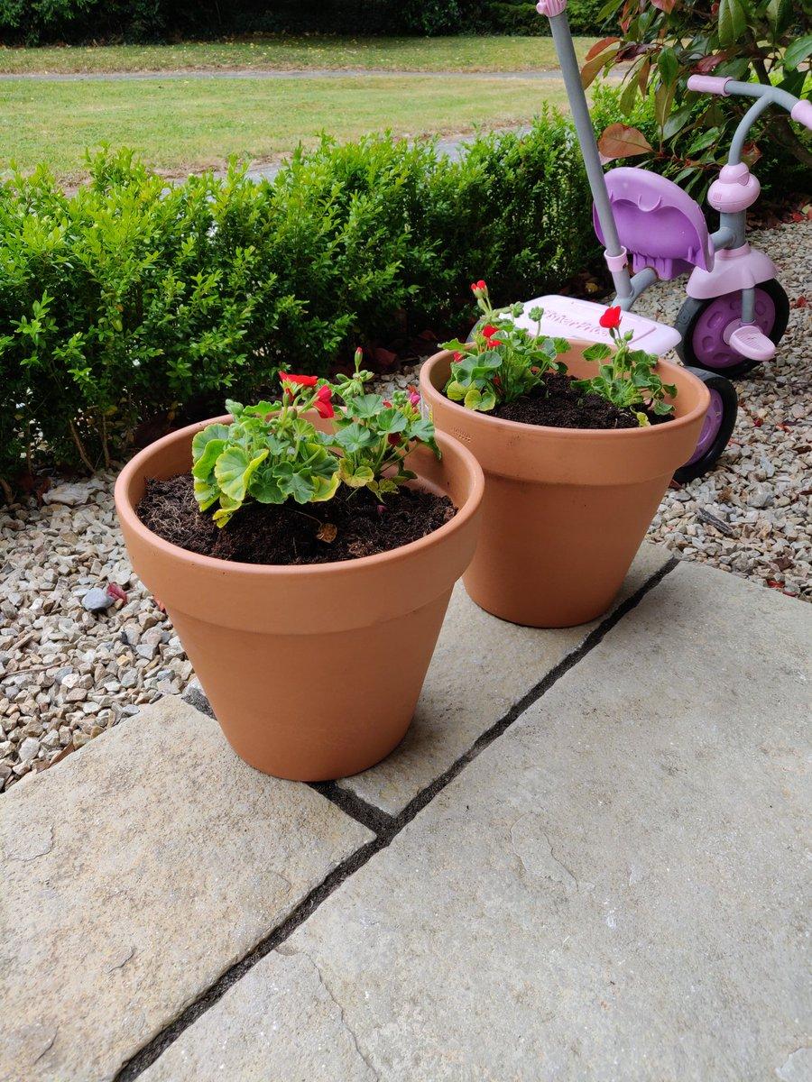 Just set them up, hopefully I'll see some lovely reds soon. #gardening #greenleaf https://t.co/eZ8lEr8SHe