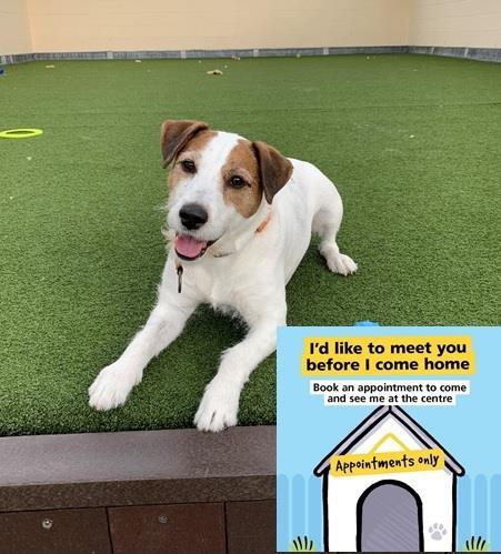 Happy news Charlie has been reserved!!    Please only reserve if you can offer an animal a home for the rest of it's life, not just in lockdown. Many thanks for all the retweets x  #dogs #Uk pic.twitter.com/6kEWX8zwhJ