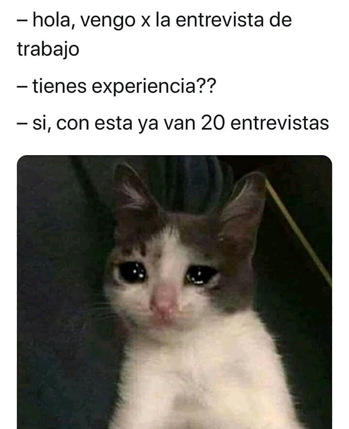 #meme #memes #humor #memesespañol #memeslatinos #memeslatinoamerica #memescastellano #medivierte #chistes #instapic #instaphoto #instacool #instagram #instameme #gato #memesdegato #empleo #entrevistapic.twitter.com/ppLoiASNrP