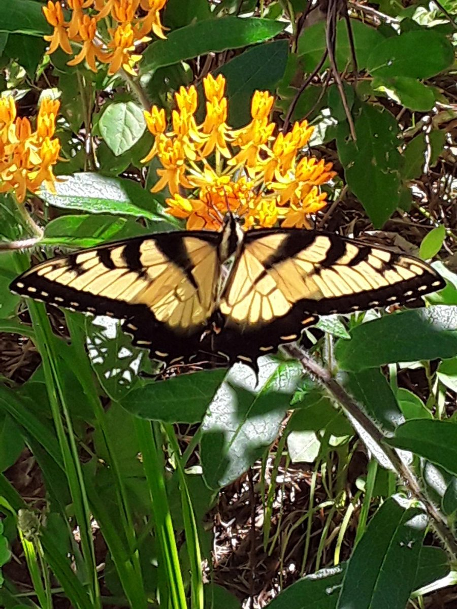 """https://www.creaturesofclaytheband.com  """"The butterfly does not look back upon its caterpillar self, either fondly or wistfully; it simply flies on."""" – Guillermo del Toro  #inspiration #Positive #kindness    #WritingCommunity  #quote  #FaithHopeLove  #StandStrongAndCourage  #Photography by CWpic.twitter.com/Fwh9H8gSBi"""
