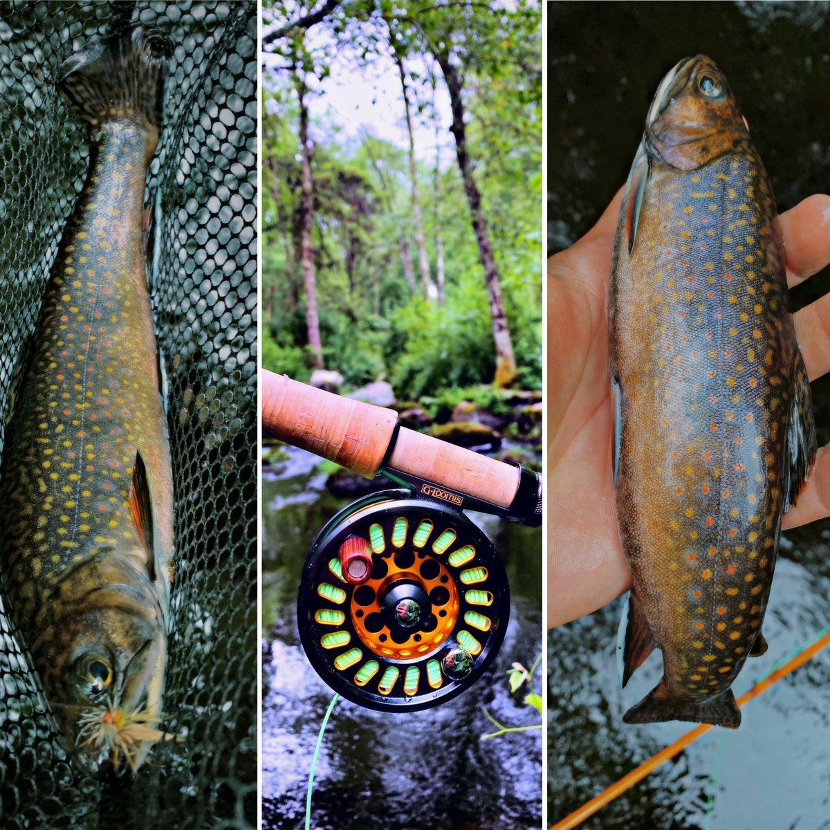 Finally! 2wks! #native #wild #brookie #beast  @scottflyrod @simmsfishing @fishpondusa #keepthemwet @RIOProducts @gerbergear @PatagoniaFlyFsh @MassDFG @OrvisFlyFishingpic.twitter.com/PXAbojYDlx