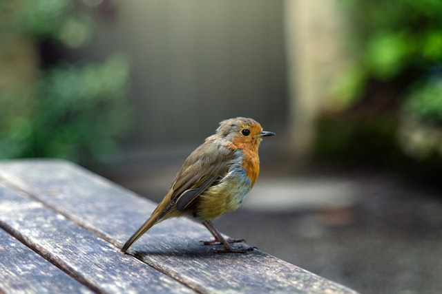 """wrote """"My grandfather is not the only black birdwatcher I know of —anymore ~ Christian Cooper and Black Birders Week prove there are more"""" https://t.co/OAnxkqNklY   #BlackBirdersWeek #BlackBirderWeek #BlackBirder #BlackLivesMatter #BlacksinStem   (Pic: Max Williamson/Unsplash) https://t.co/8AUk3WGK6V"""