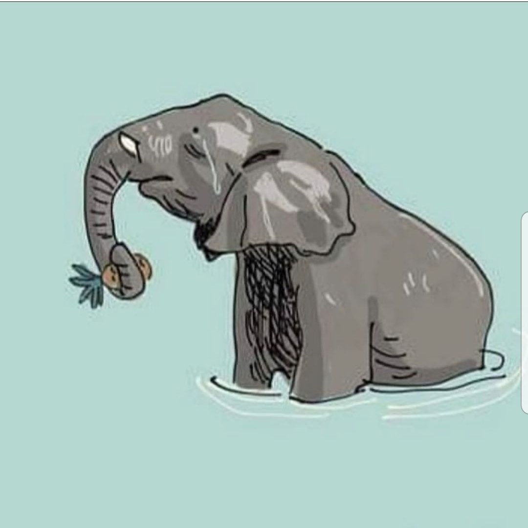 #elefantessa