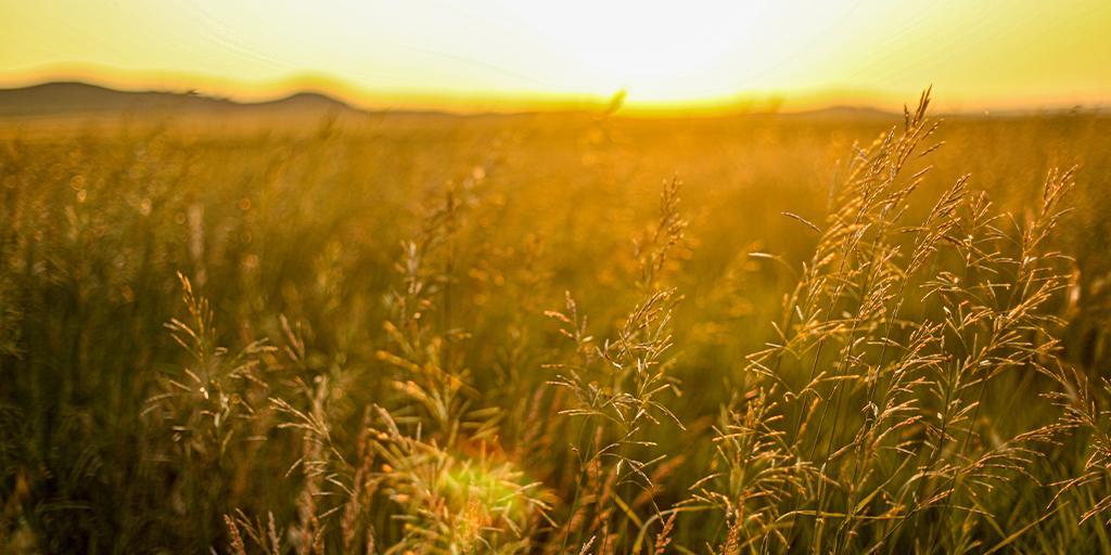 """Anybody can love the mountains, but it takes a soul to love the prairie"" — Willa Cather. Happy #NationalPrairieDay!  #BeNDLegendary      📷: Anzley Harmon https://t.co/uQjHaqXBJv"
