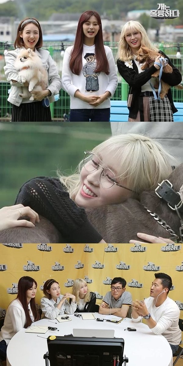 Nayeon, Momo and Tzuyu on Dogs are incredible Momo talk about her worries on the toilet training and nibbling of Boo while Nayeon talk about the separation anxiety sympton of Kookeu. There is also a dog breed Momo wanted to raise (Larger dog) n.news.naver.com/entertain/arti…