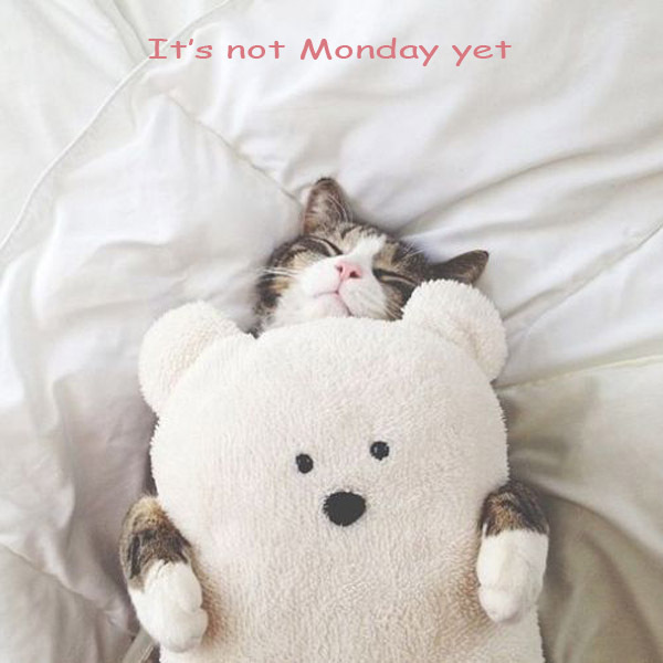 It's Sunday! It's not monday yet~^_^ #cuteanimals #catpic.twitter.com/rkHQASWXrW