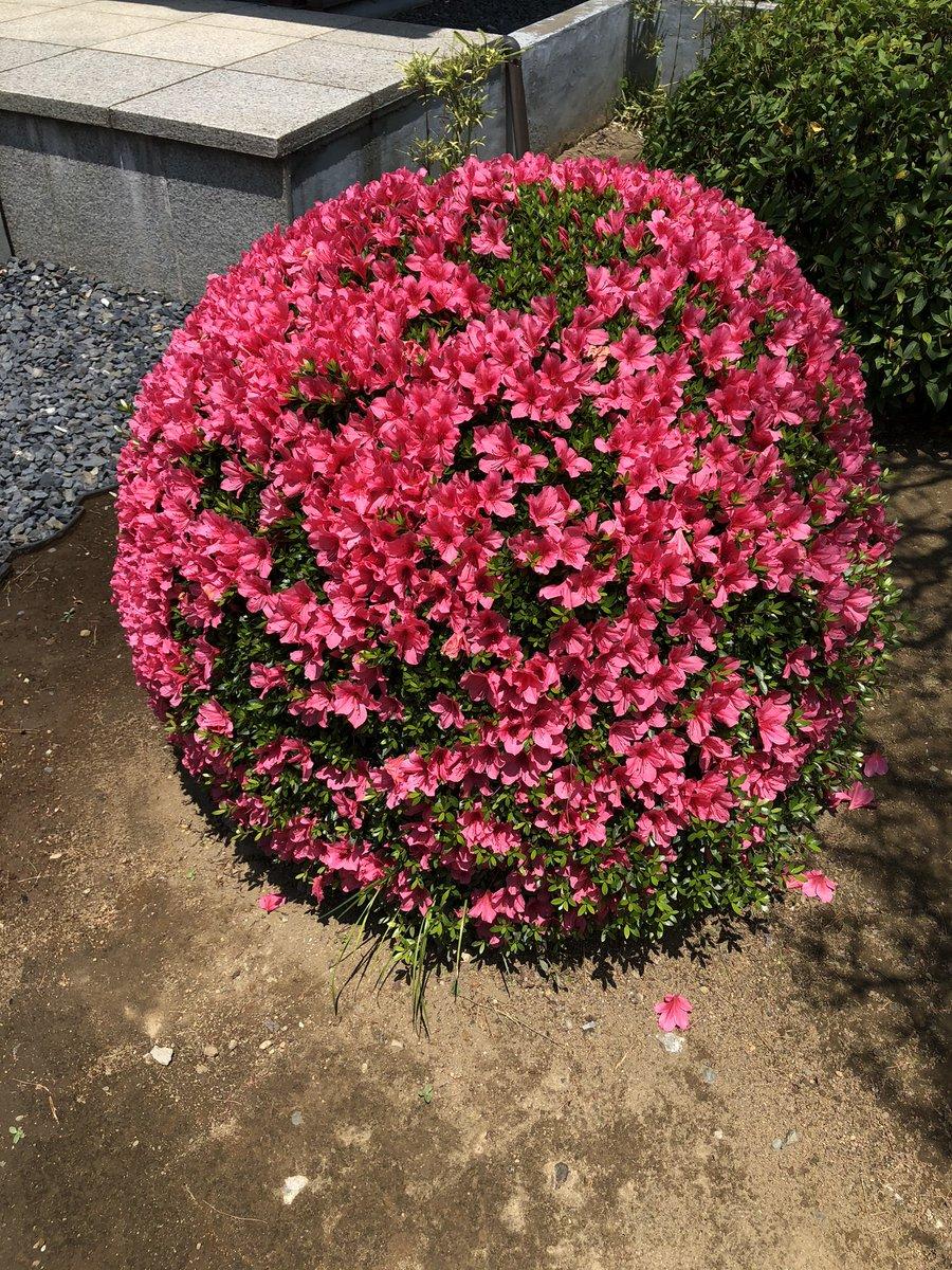今日も暑いです😵お墓まいりに行った時見かけたのですが、お花上手く手入れされててビックリ‼️