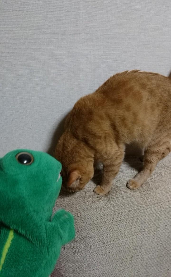 猫『ごめんにゃさい』#プロポーズの日