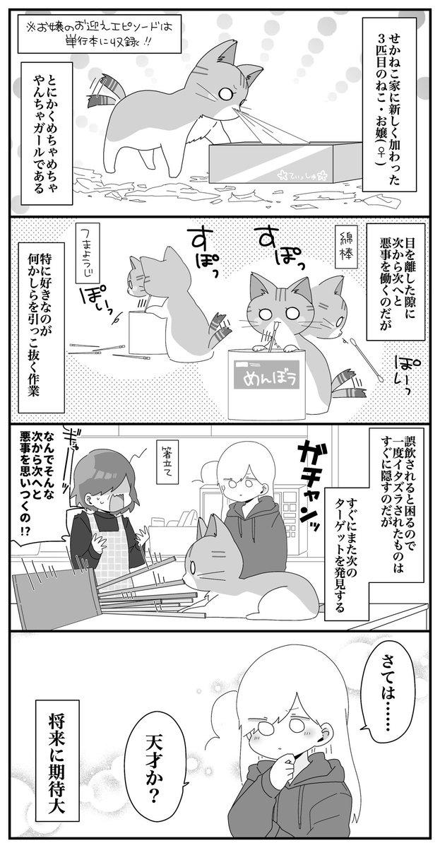 うちに新しく来た子猫の話