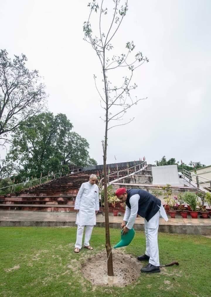 अखिलेश यादव जी का नाम गिनीज बुक के लिए भेजा गया है। आखिर इतना बड़ा पेड़ लगाना कोई आसान काम नही है। 😂🤣😅😂 #पर्यावरण_दिवस https://t.co/8d41gx5Lp7