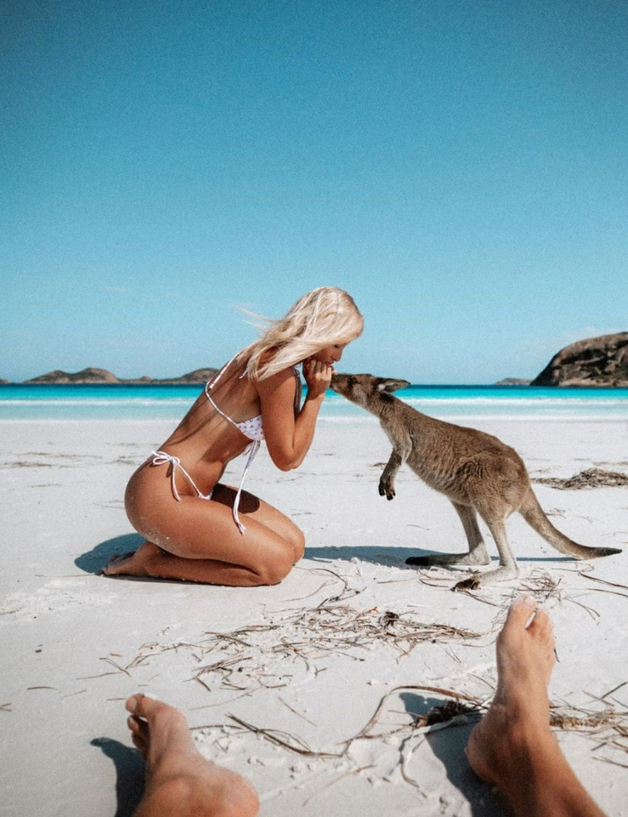 Roos on the beaches of Western Australia, alive and free, as all animals should be x ⠀⠀⠀⠀⠀⠀⠀⠀⠀ Photo @gypsea_lust #plantbasednation  #fortheanimals #crueltyfree #benice #bekind #animallover #ethicalpic.twitter.com/qdSyYOqNic