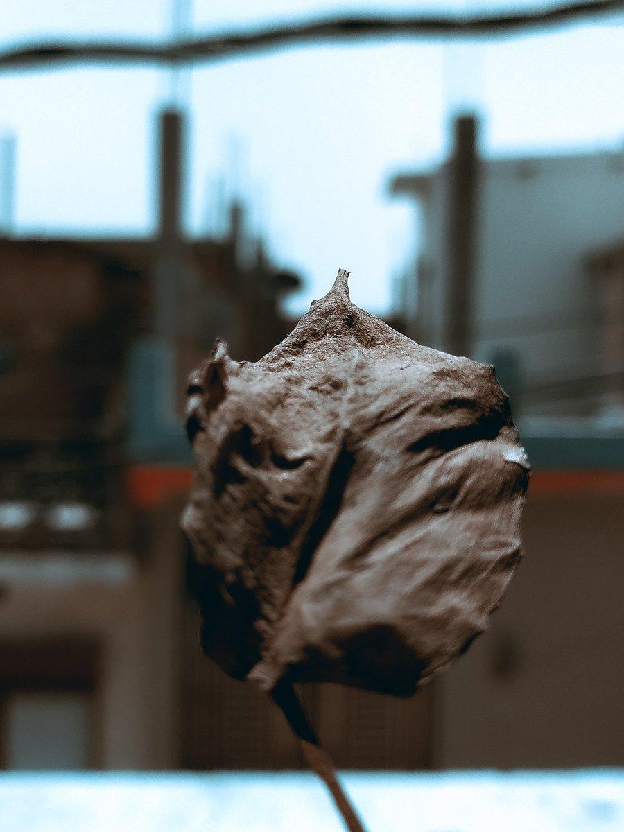Tones leaf #shotonredmi #redminote8 #shotbymi @miuirom @MIUI_India @RedmiIndia @NeonVikash @NatGeoPhotospic.twitter.com/N2y1qqKhDC