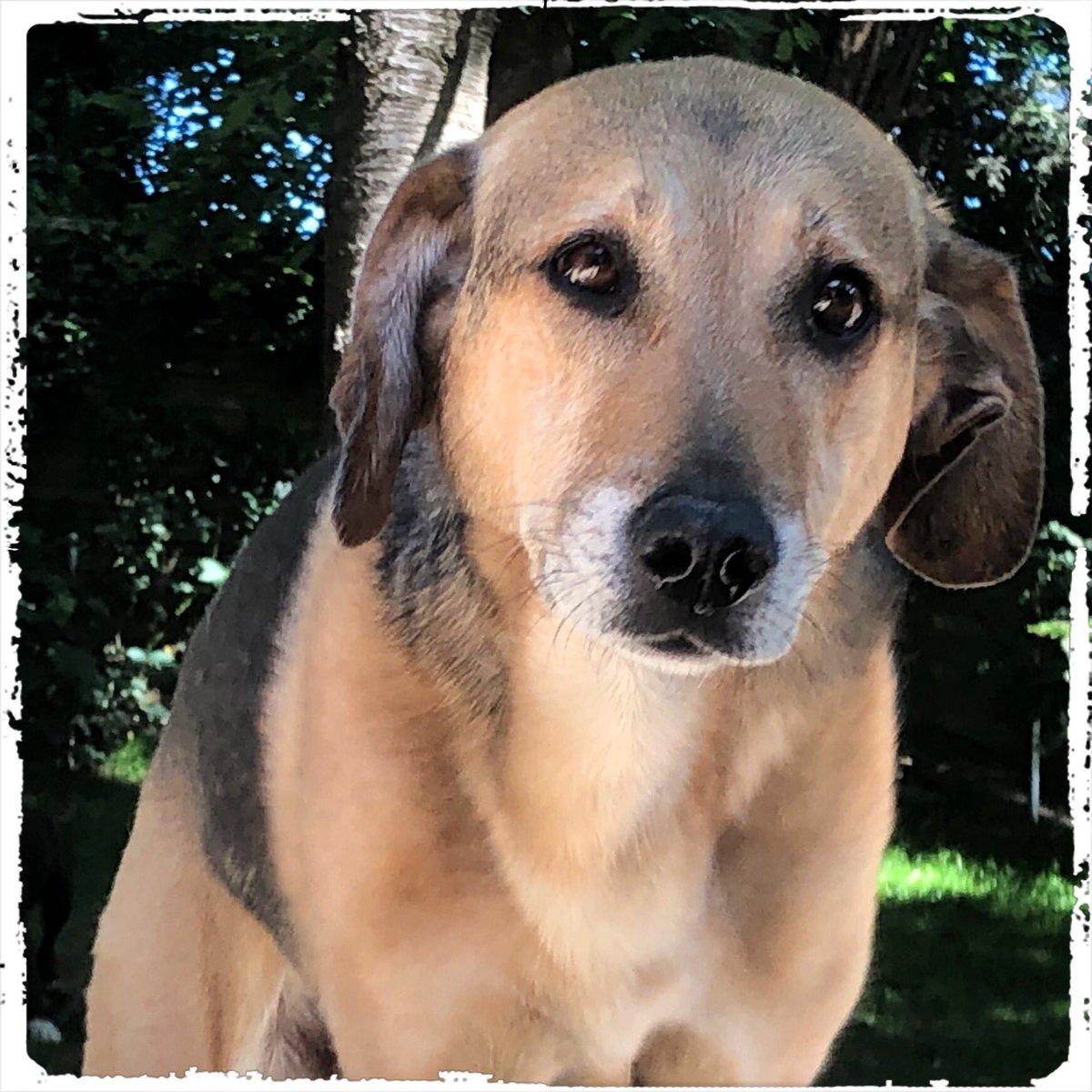 Mika  .  #doglover #ilovemydog #instadog  #meinhund #dogs_of_world #dogsearth #puppies #hund #hundeliebe #hundeleben #dog  #dogislove #trustrespectlove #hundeland #hundeblog #lieblingshund #lebenmithund #fellnase  #besterhund #dogsneeddogs #doggy #dogs #hundefreundschaftpic.twitter.com/AY6Whzh1zn