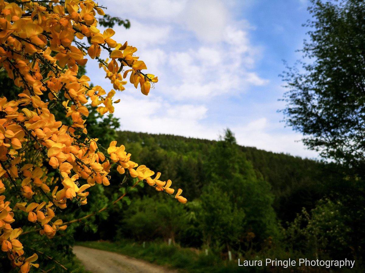 Pretty colours. #photography #nature #trees #sky #outdoors #walks #Path #Scotland #scottishscenery #happy #photooftheday #capture #camera #photographyislife