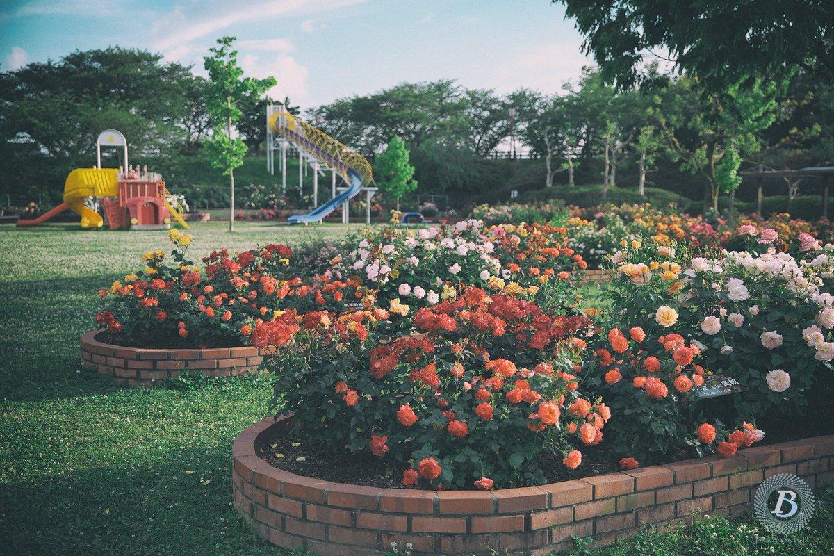 #ばら公園いこいの広場 #バラ #薔薇 #rose #神戸町 #岐阜 pic.twitter.com/qeNbMx0nm3