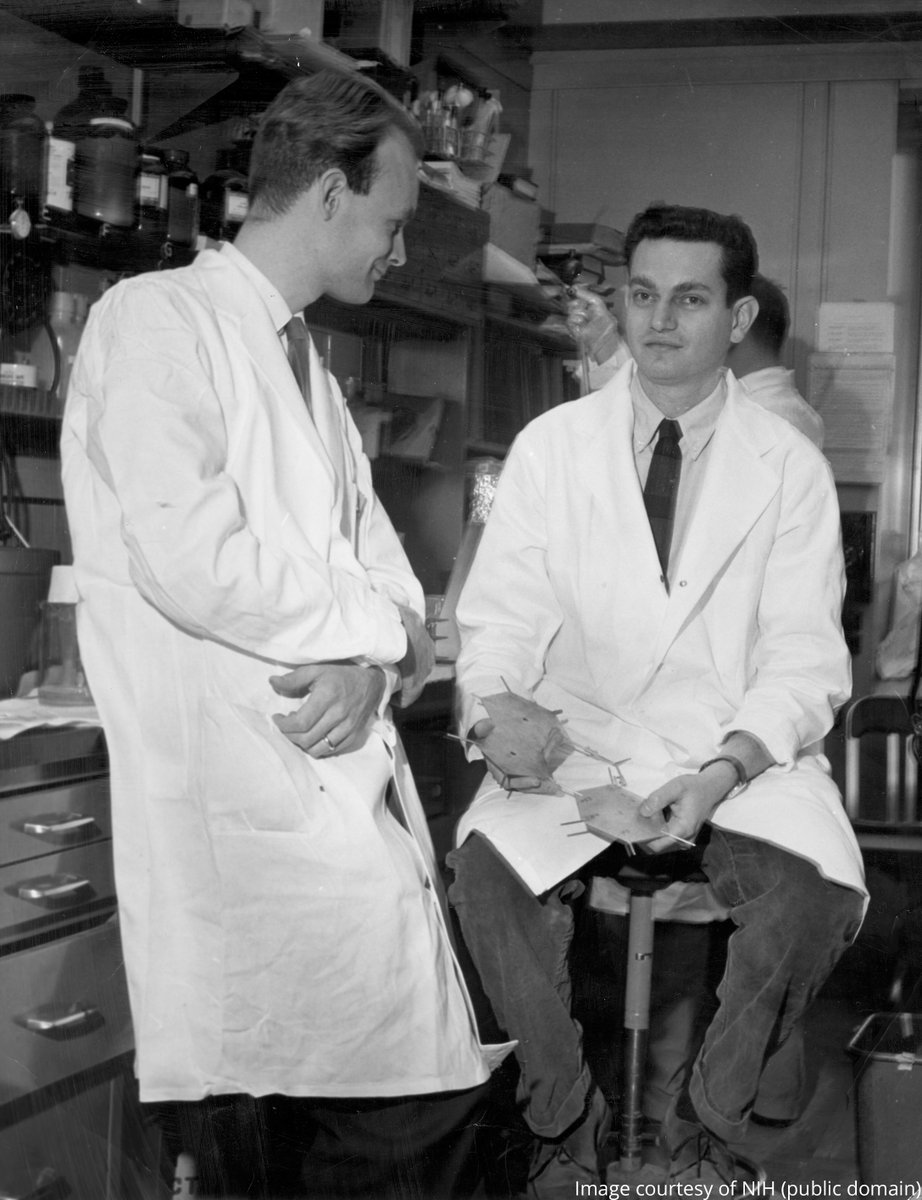 The first letter of the genetic code was cracked #OTD in 1961 at 3am by Marshall Nirenberg (right) and Heinrich Matthaei (left) at the @NIH.   Nirenberg shared the 1968 Medicine Prize with Har Gobind Khorana and Robert Holley for their work on the genetic code.  #NobelPrize https://t.co/1jxQzVe6C3