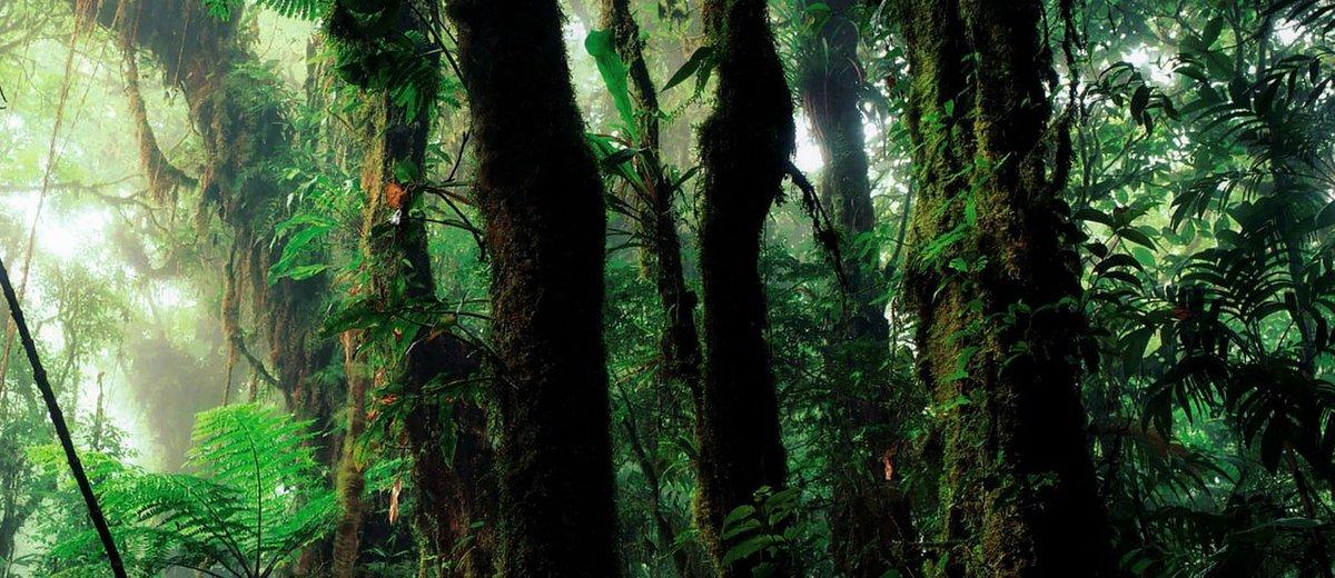 Le rôle de l'Union européenne contre la déforestation importée, séance plénière @lecese à suivre en direct le 27 mai 2020 à 14h30 https://t.co/6NHK7yGoYS #forêt #Europe https://t.co/0hEET8N81T