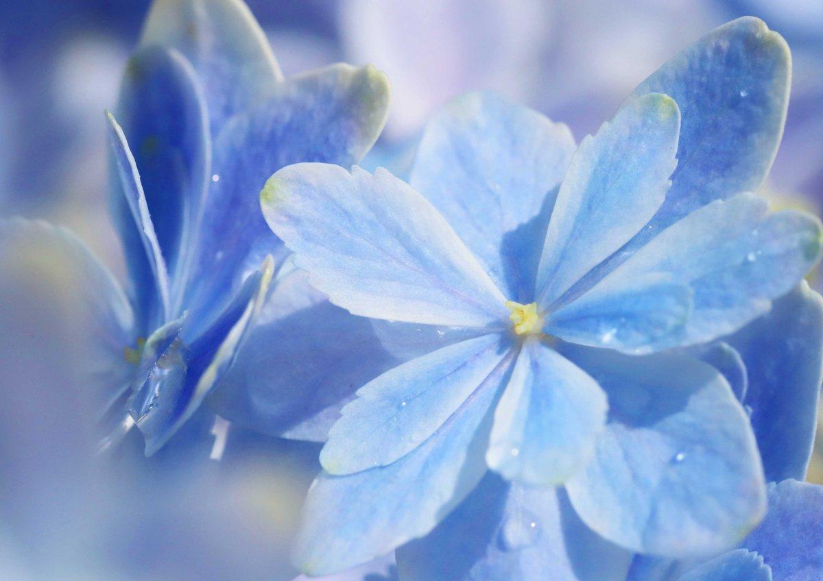 教会の軒先に置かれた、涼やかなブルーの紫陽花。「万華鏡」という品種だそうです(^^)