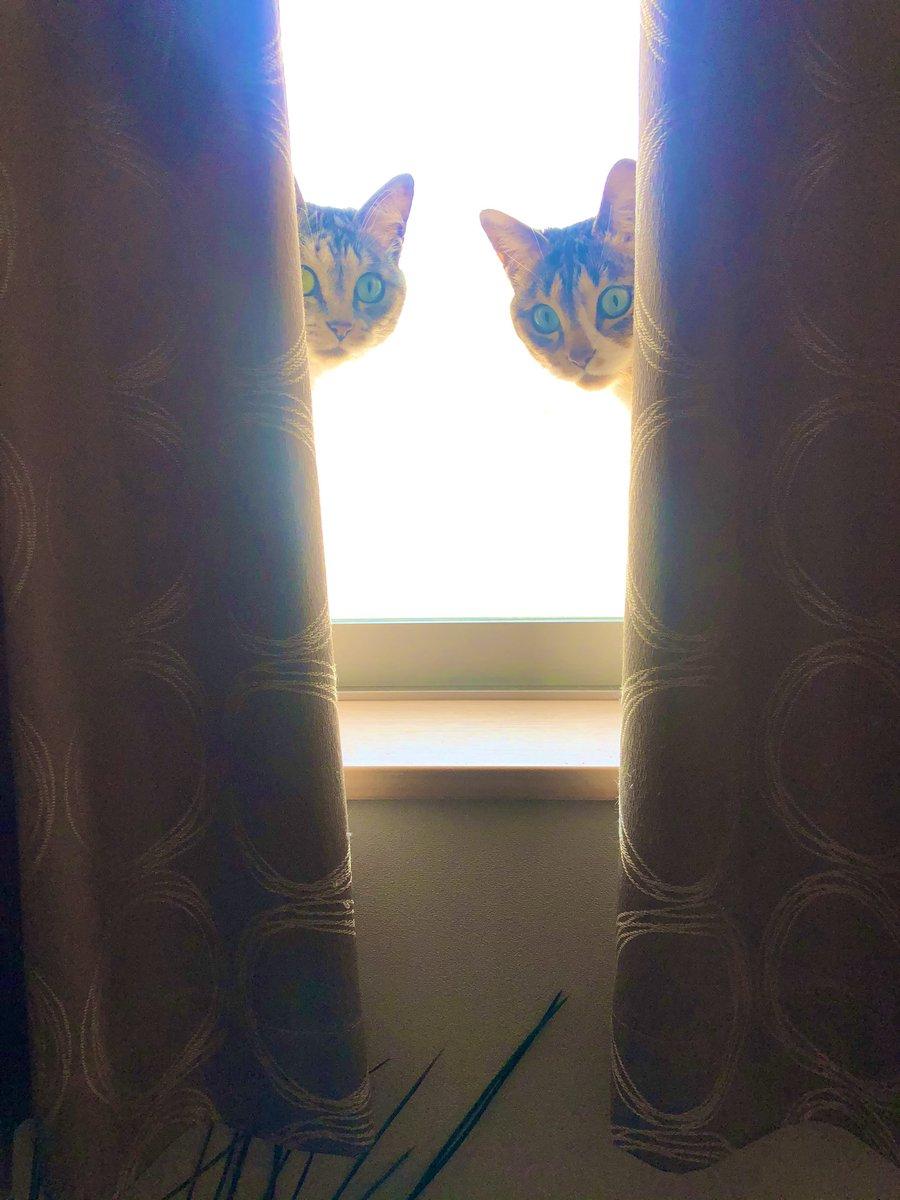 「猫界へのお誘い」