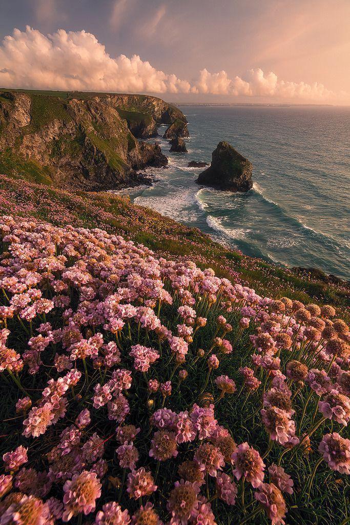 Beautiful view #nature #photography #flowers #sky #sea #awesome #photooftheday #NaturePhotography #natureloverpic.twitter.com/Sj6UT3n6y4