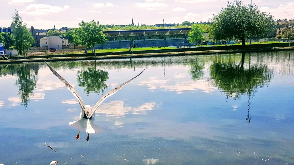 Flying low over Inverleith pond #wildlife #WednesdayMotivation #bird #pond #reflections #water #park #photography #landscapepic.twitter.com/VjuTnLRR1R – at Inverleith Park