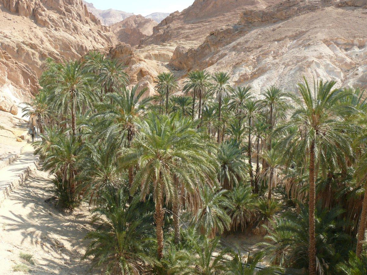 Another part of an Oasis in the Sahara Desert in Chebika, Tunesia (2018).  #chebika #visittunisia #discovertunisia #palmtrees #tunesia #tunisia #sahara #saharadesert #northafrica #oasispic.twitter.com/KtjjEKJ7XO