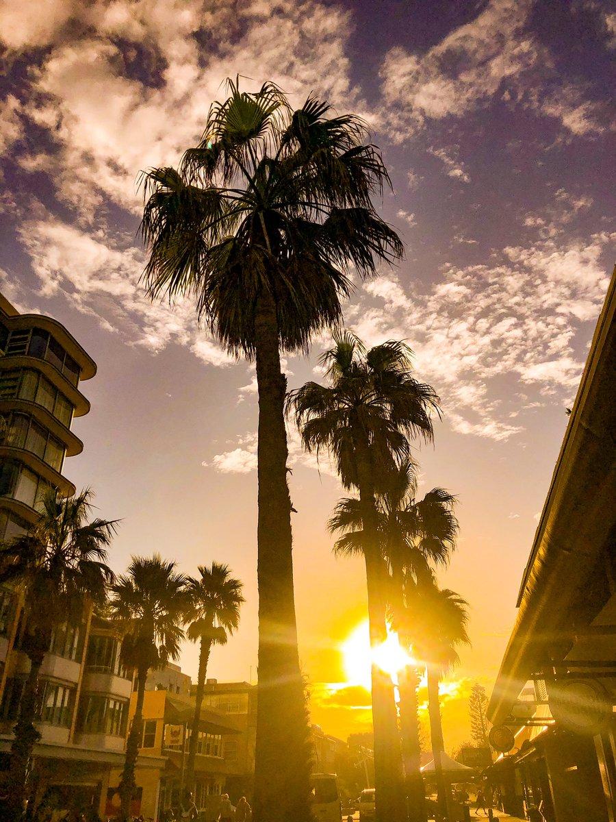 A little La La Land in Bondi Beach  Float me away to Cali #PalmTrees #daydreaming #DejaVupic.twitter.com/EWx0Ei1TXl