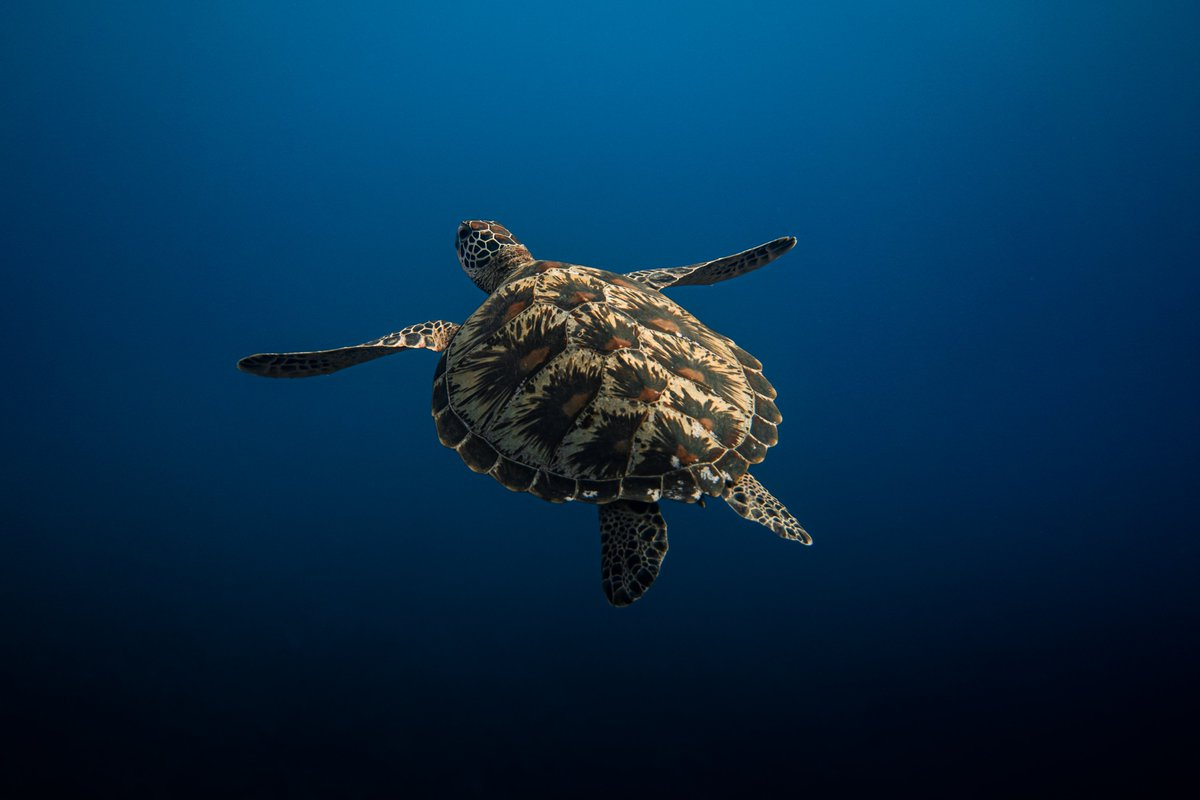 Turtle post? Turtle post  #guam #guahanpic.twitter.com/GaPbRARaWe