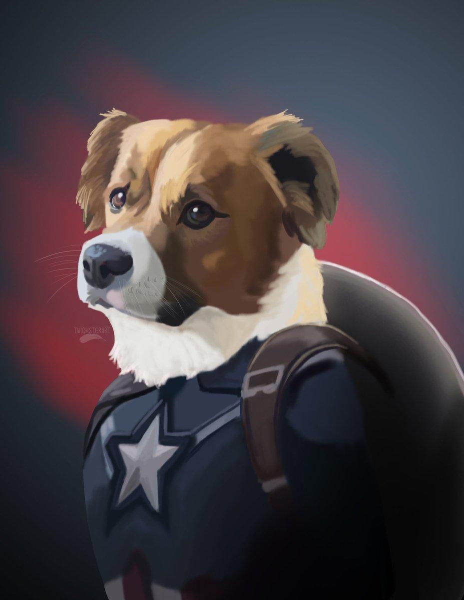 Captain Dodger or Steven Dodger? Not all heroes wear capes. Some heroes wear fur. @ChrisEvans #avengers pic.twitter.com/MiJXfA159m