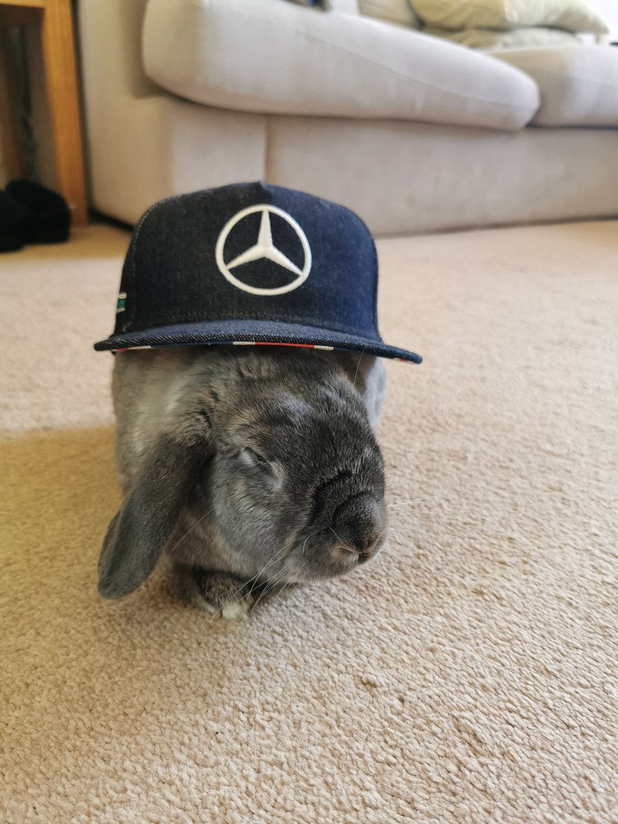 Finally managed to get the Rabbit in team colours, @MercedesAMGF1 new mascot? 😂 😂 @F1 #F1Rabbit 😊 🐰 https://t.co/gVKUdadsEE